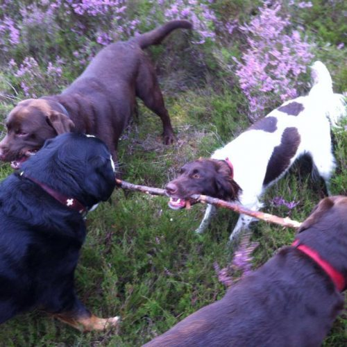 hondenuitlaatservice bussum