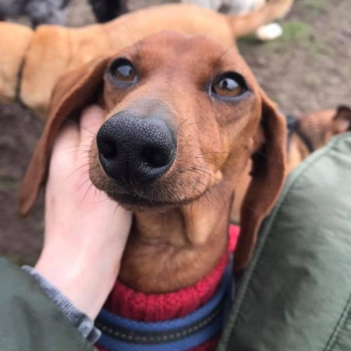 hondenuitlaatservice Hilversum