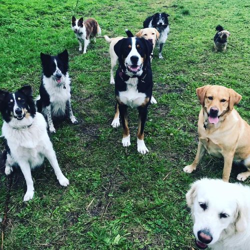 hondenuitlaatservice laren